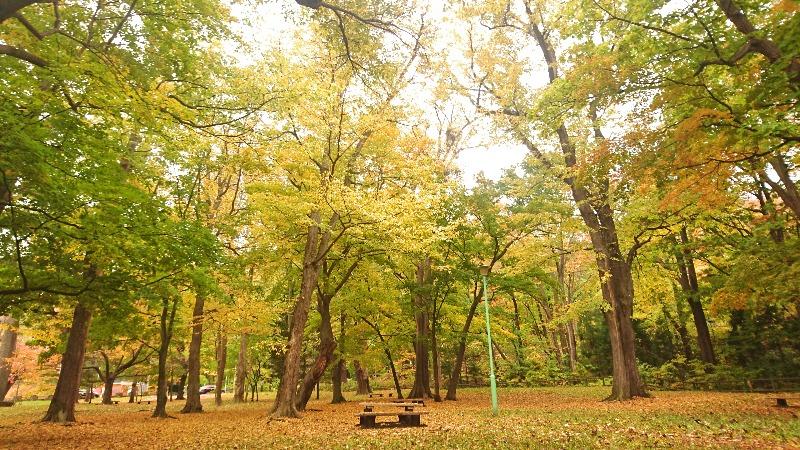 円山公園画像