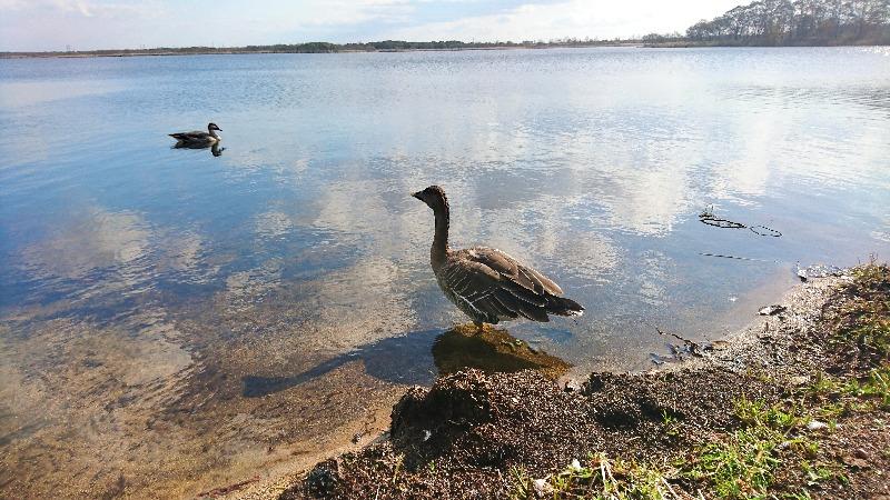 ウトナイ湖画像