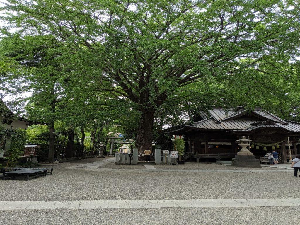 田無神社ご神木