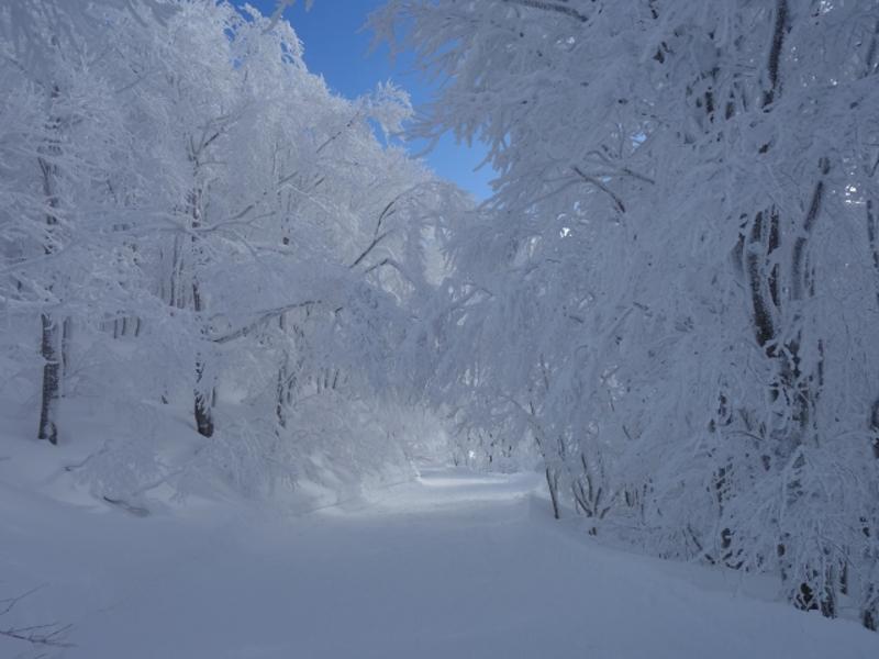 樹氷の道画像