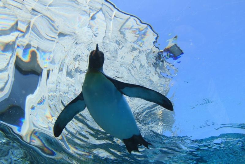 空飛ぶペンギン画像