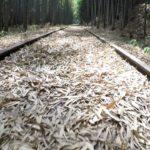 日本版・恋のトンネル!?倉吉観光の穴場で「廃線×竹林」を歩く