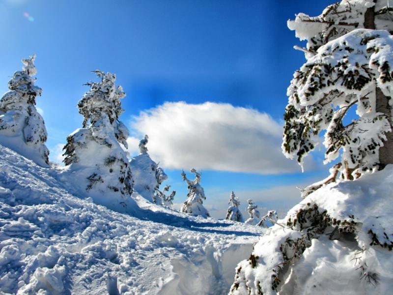 蔵王樹氷画像