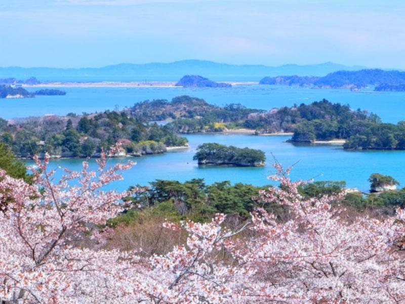 西行戻しの松公園 桜