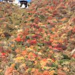 雲仙のロープウェイでツツジ・紅葉・霧氷・雲海を仁田峠から出発