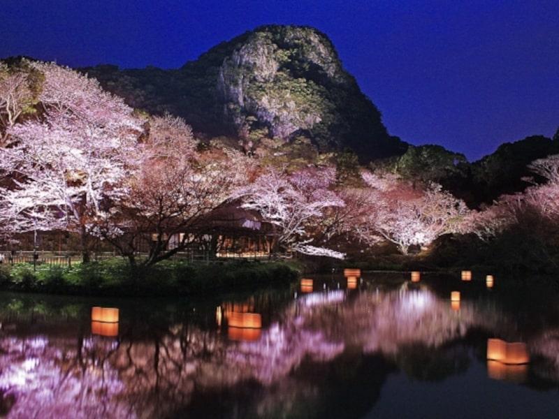 御船山楽園桜ライトアップ