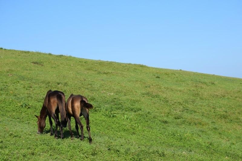 都井岬の馬5