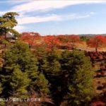 会津若松『会津村』は巨大観音像から桜・紅葉・コスプレまで楽しめる