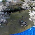 鳥屋野潟公園は桜も紅葉もばっちりの野鳥さえずる森!