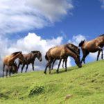 都井岬の野生馬たちと感じる自然!灯台や神社も見どころ満載