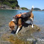 青井浜ワンワンビーチで犬と海水浴!一緒に宿泊できるホテル情報も!
