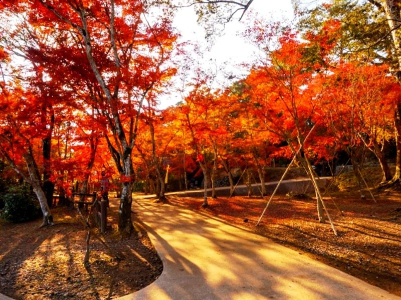 曽木の滝公園の紅葉