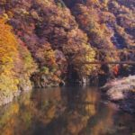 赤芝峡で紅葉の遊歩道散策!見ごろの時期や駐車場情報を詳しく紹介