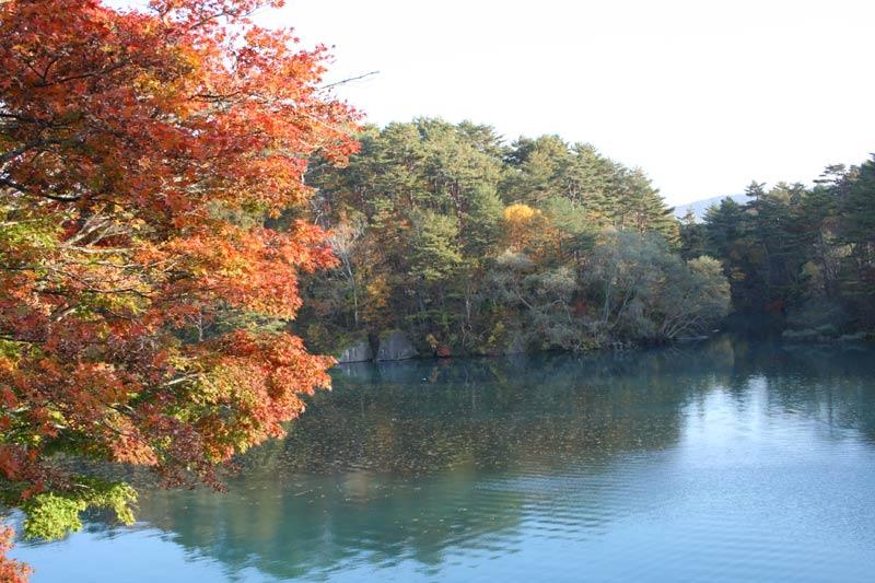 紅葉時期画像