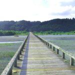 蓬莱橋の見どころ・アクセス情報や周辺観光スポットまで紹介!