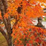大分 臼杵普現寺の紅葉ライトアップ 吉四六さんの菩提寺