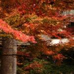 竈門神社は紅葉ライトアップ・桜の名所 むすびの糸・社務所のデザインも素敵!