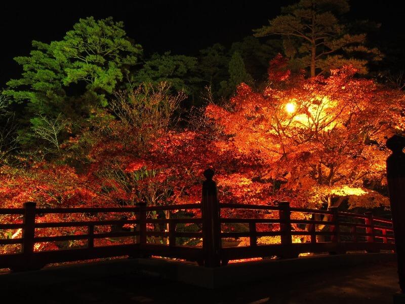 弥彦公園_紅葉ライトアップ_004