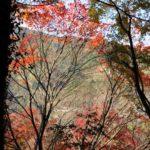 徳島県吉野川市に溢れる自然は癒し観光に最適!温泉やホタルも最高