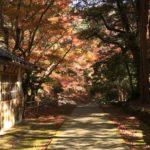 鰐淵寺 島根にある紅葉の名所・浮浪の滝や入山料等みどころをご紹介