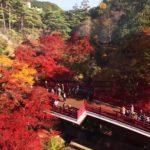 新潟『弥彦公園』での紅葉の見ごろ・時期やもみじ谷の2019年ライトアップ情報を紹介
