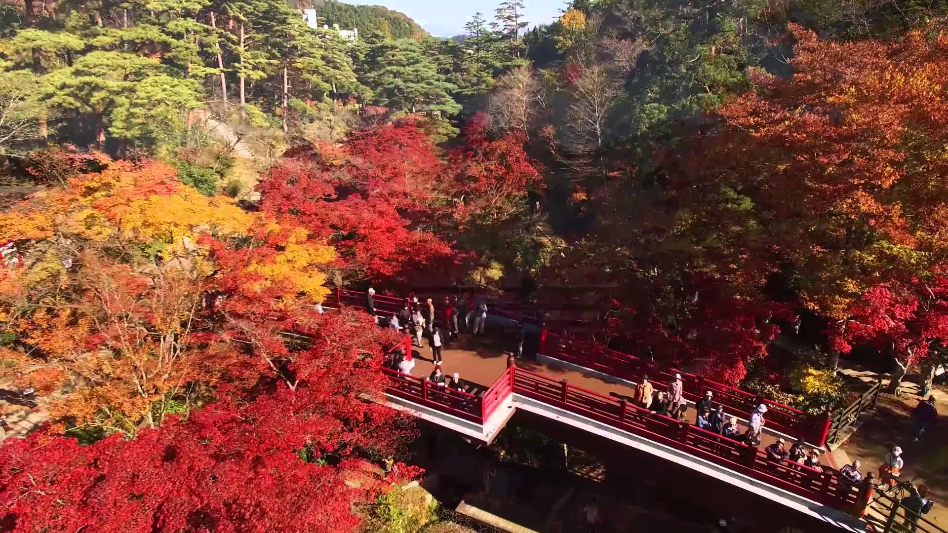 新潟県随一の紅葉スポット『弥彦公園』もみじ谷はライトアップも!