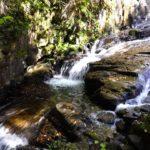 岩屋堂公園でホタル水遊び・桜紅葉ライトアップの名所は自然の宝庫