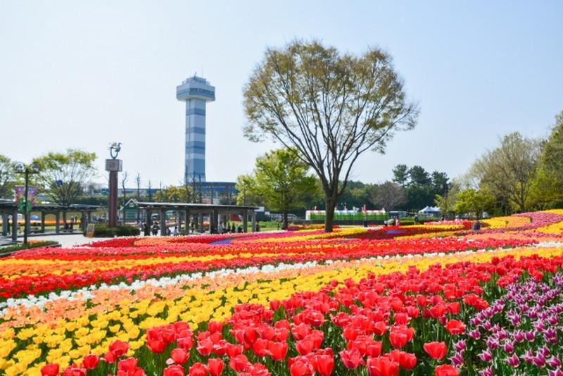 木曽三川公園センターチューリップ畑