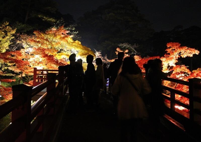 弥彦公園_紅葉ライトアップ_001