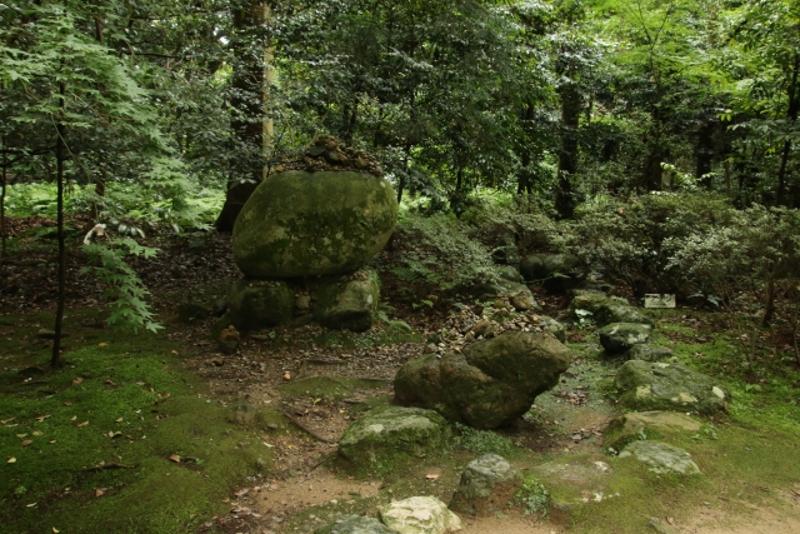 入らずの森画像2