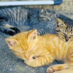 猫好きには必見! CNNも取り上げた猫の島 「福岡県 相島」