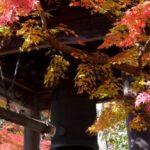 伊豆の小京都『修善寺温泉』で楽しむ四季の移ろいとおすすめ観光スポット3選