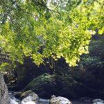 徳島県三好市の秘境で おすすめ観光スポット「祖谷のかずら橋」を渡る!!