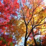 広島の古刹 三瀧寺に魅了される!格別の紅葉・カフェ・四季の彩り