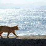 相島は猫好きが一度は訪れたい福岡の離島! CNNも取り上げた猫の島