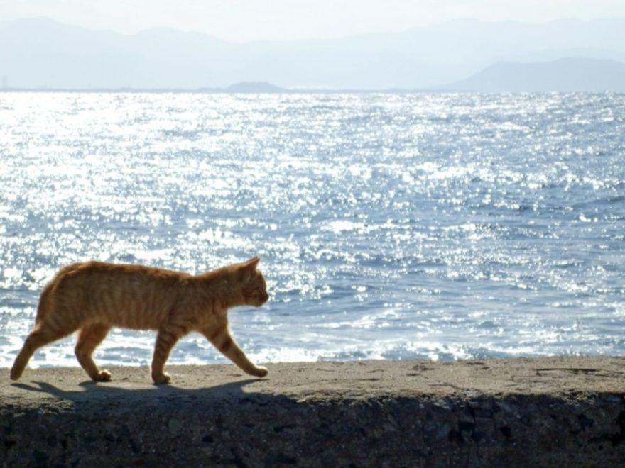 相島の猫_cover