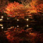 東京・荻窪『大田黒公園』の2018年紅葉ライトアップ情報とアクセス方法を紹介