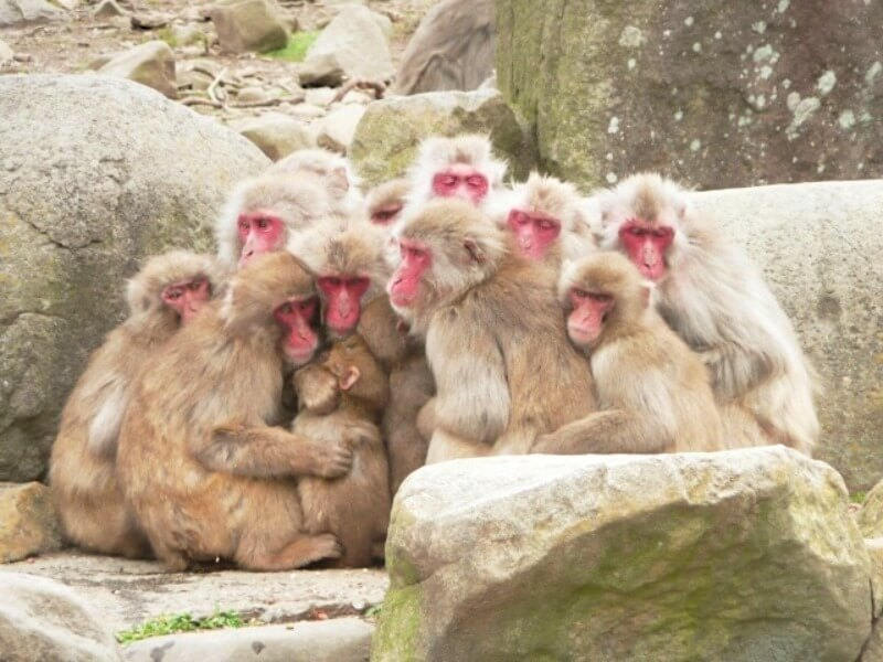 サル団子_イメージ画像