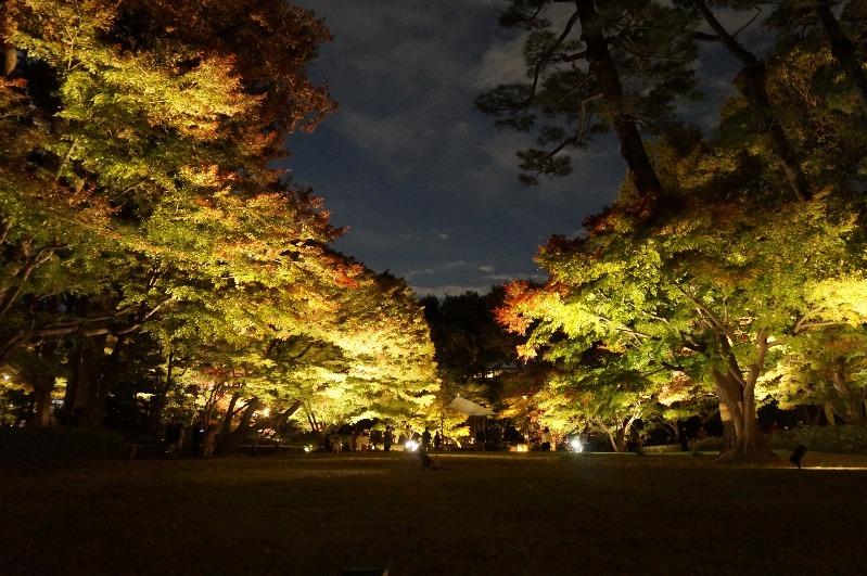 大田黒公園_2018年11月23日_009