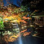 荻窪『大田黒公園』の2019年紅葉ライトアップ・見頃情報とアクセス方法を紹介