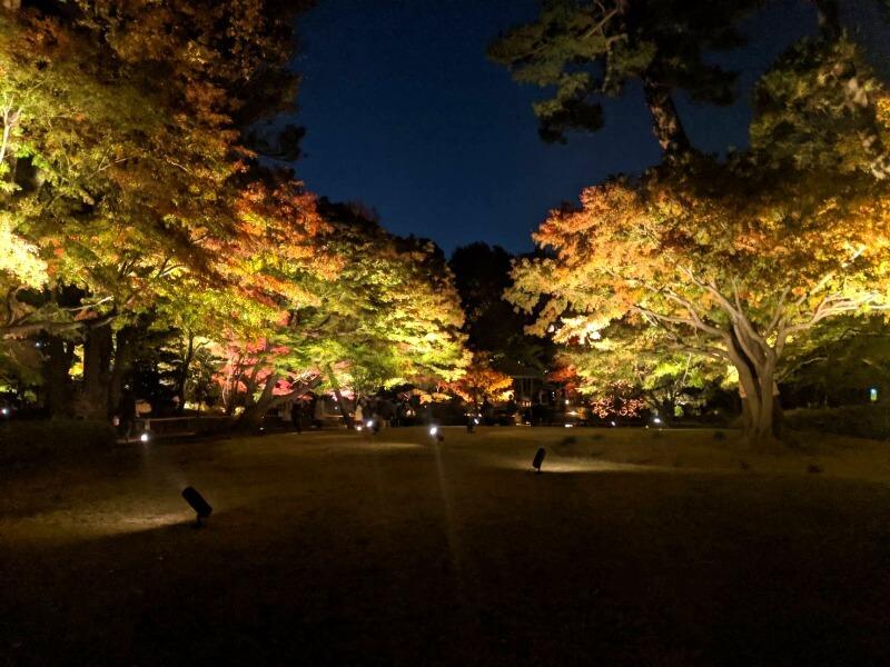 大田黒公園_紅葉ライトアップ_001