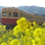 『小湊鉄道』が菜の花畑をゆく!春とノスタルジーの共演を楽しむ!
