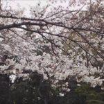 東京の桜を公園に見に行こう!超有名どころから穴場までおすすめ5選