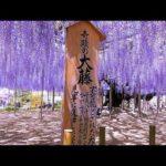 花と歴史の共演!栃木県足利市のおすすめ観光スポット4選