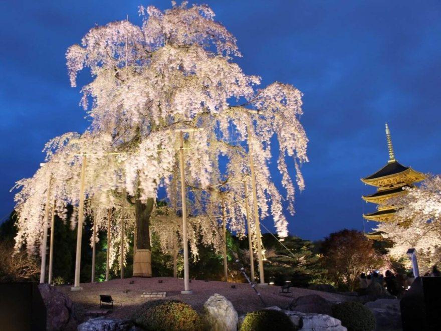 関西夜桜_cover