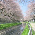 総延長20km越え!埼玉の穴場『見沼田んぼの桜回廊』は桜並木の長さ日本一!
