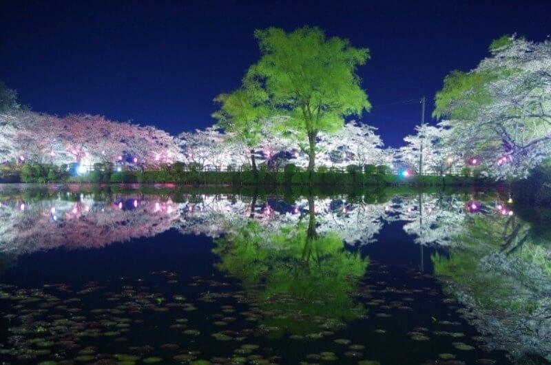 茂原公園_夜桜ライトアップ
