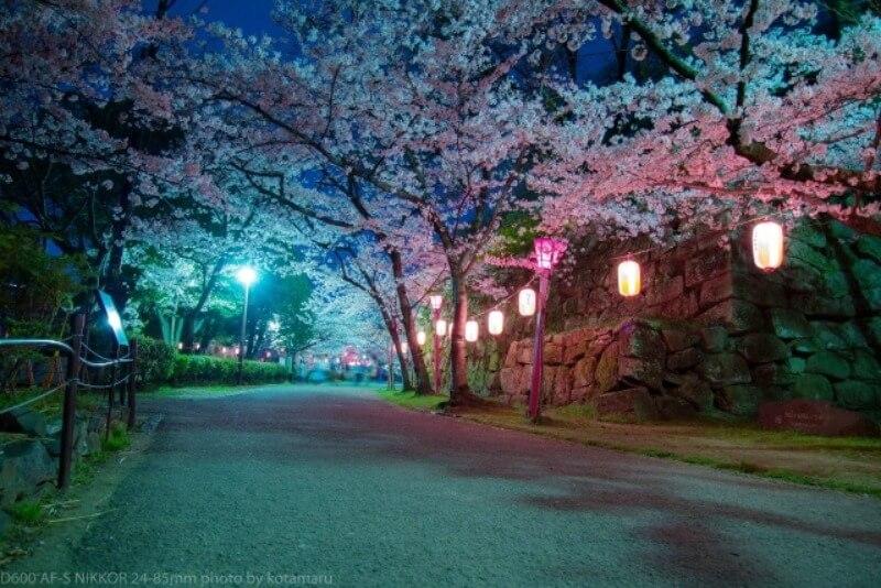 和歌山城_夜桜ライトアップ
