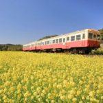小湊鉄道で春の千葉房総へ!菜の花畑の時期や撮影・観光スポット