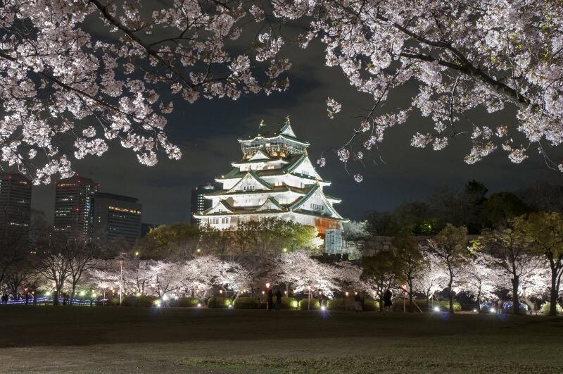大阪城公園_桜ライトアップ